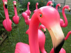 getflocked_group